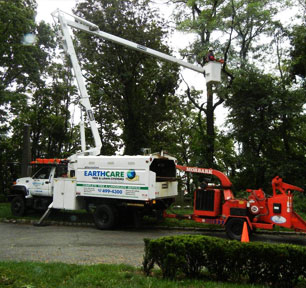 Tree Services - Long Island