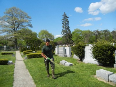 commercial lawn spraying