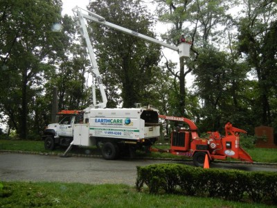 commercial tree cleanup