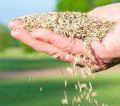 Seeding - Lawn Care