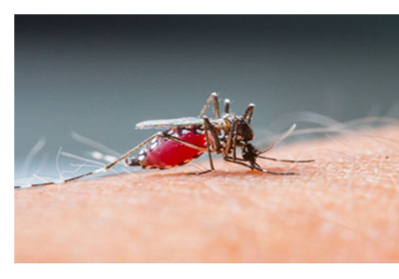 Mosquito Control on Eastern Long Island