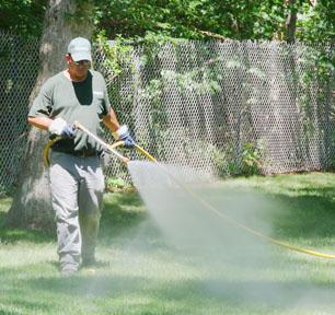 Tree Services - Long Island