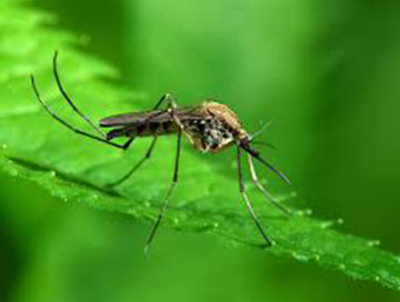 long-island-mosquito--control