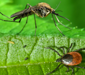 Tick and Mosquito Control Long Island
