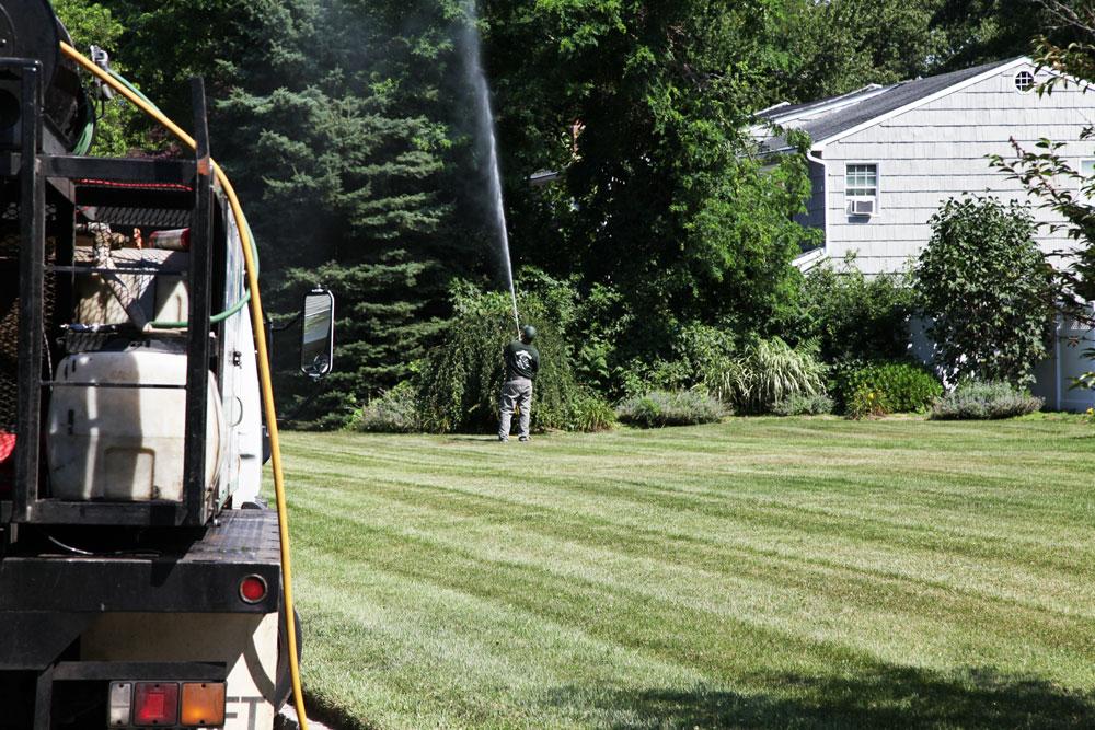 Tree Spraying by Alternative Earthcare