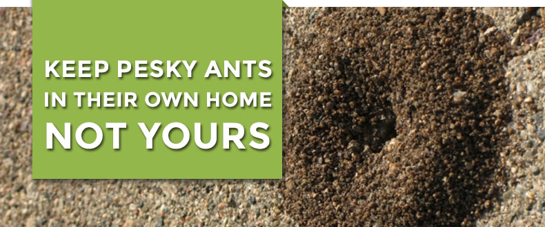 Anthill Example - Extermination on Long Island