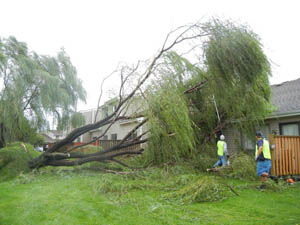 Long Island Emergency Tree Service