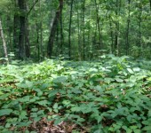 Poison Ivy Control Long Island