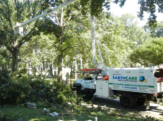 Tree Removal - Alternative Earthcare