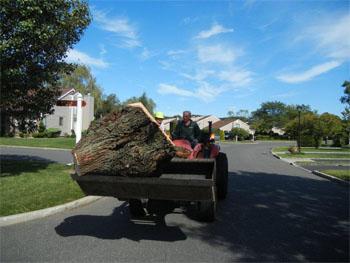 tree-stump-removal-long-island