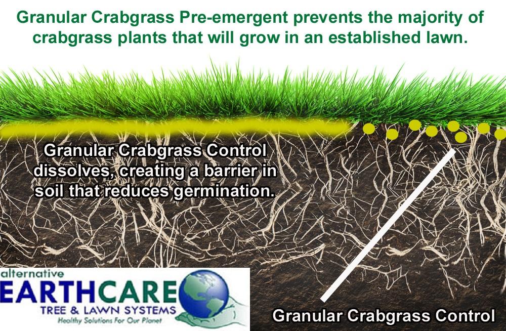 Fertilizer And Crabgrass Control