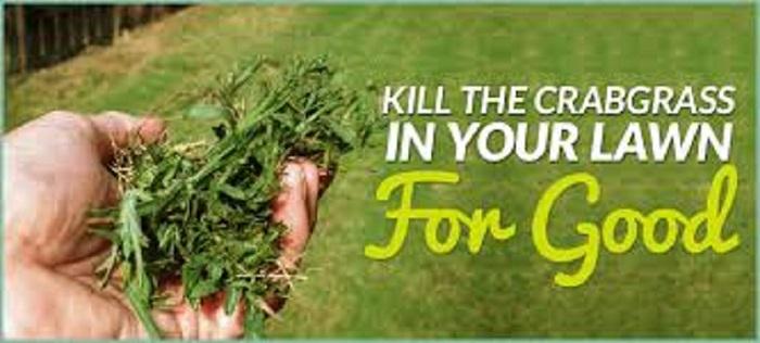 long-island-crabgrass-control