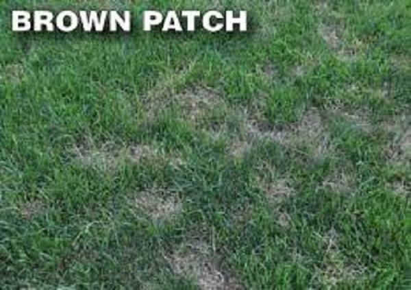long-island-lawn-disease-treatment-and-maintenance