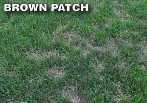 long-island-lawn-disease-treatment-and-maintenance