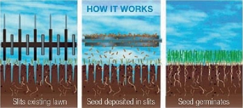 long-island_slit-seeding