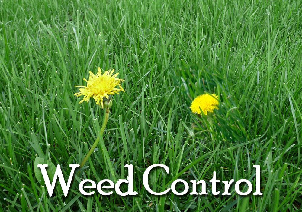 long-island-weed-control